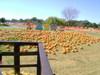 Pumpkin_fun_016_2